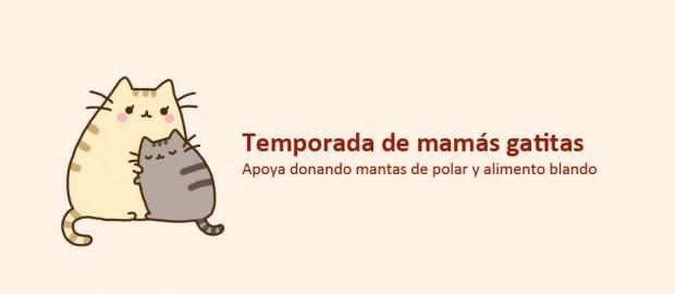home mama gatitas
