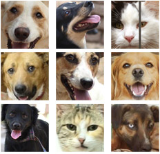 adoptar-perros-gatos-uaa